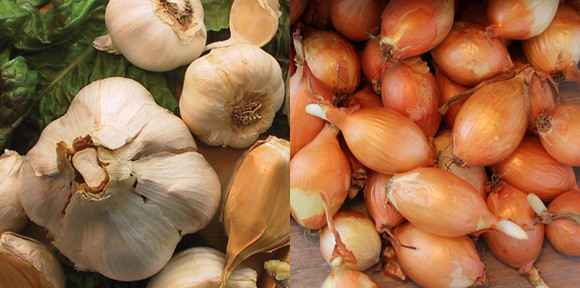 GARLIC & SHALLOT VARIETIES